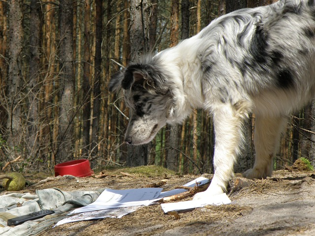 pies czyta
